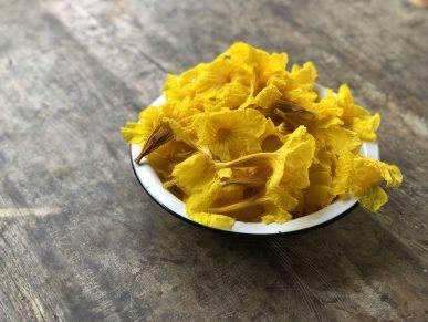 Flores de Ipê Amarelo